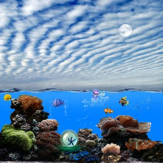 Обои на телефон рыби, подводные, рыба, океан, небо, море, луна, волны, волна, underwater hd, pear, jellyfish
