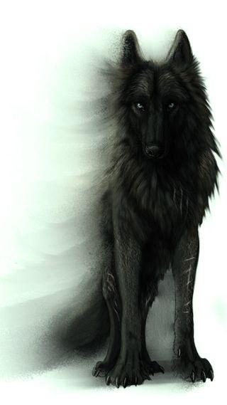 Обои на телефон тень, черные, собаки, волк