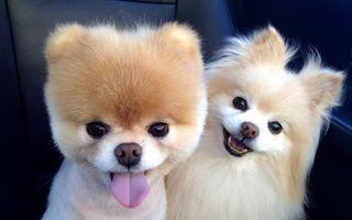 Обои на телефон щенки, собаки, милые, малыш, 4k