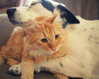 Обои на телефон друг, собаки, любовь, кошки, котята, друзья, love