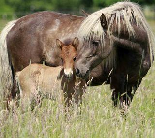 Обои на телефон лошадь, foal