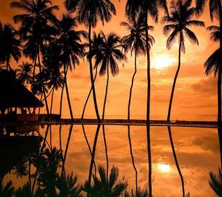 Обои на телефон вечер, пальмы, закат, деревья, гавайи, bungalow wallpapers