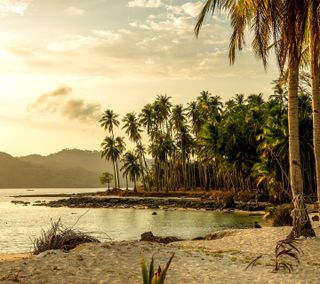 Обои на телефон тропические, пляж