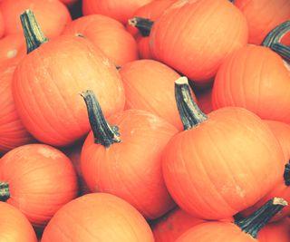 Обои на телефон zedgefall, fall pumpkins, природа, деревья, осень, тыква, снаружи