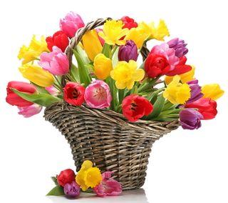 Обои на телефон тюльпаны, цветы, красочные, весна