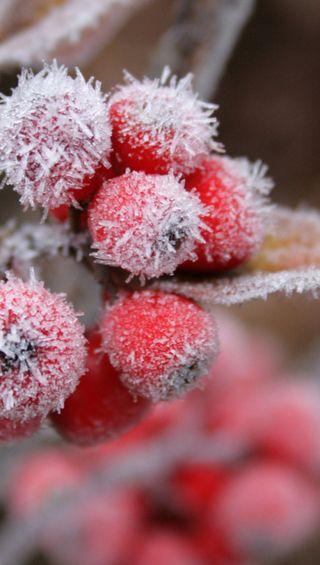 Обои на телефон ягоды, макро, снег, грани, s6, qhd, 1440x2560