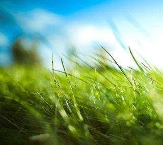 Обои на телефон трава, лето, солнце, природа, небо, листья, зеленые, деревья, дерево