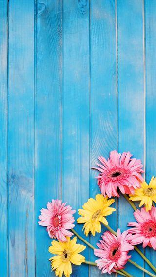 Обои на телефон деревянные, цветы, синие, розовые, природа, желтые, дерево, blue wood