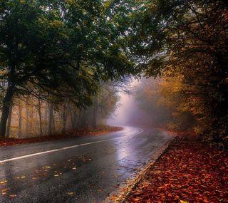 Обои на телефон осень, дорога, дождь, день