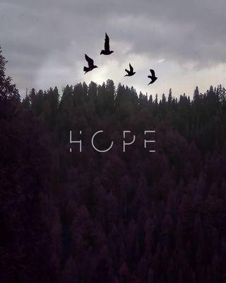 Обои на телефон птицы, цитата, природа, надежда, крутые, креативные, зима, дождь, высказывания, winterishere