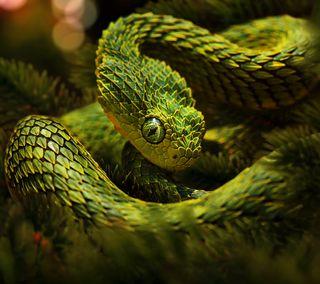 Обои на телефон змея, рождество, зеленые