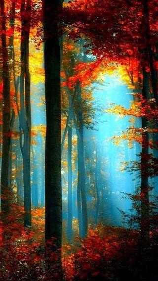 Обои на телефон дерево, черные, синие, свет, оранжевые, луна, листья, красые, красочные, желтые, деревья, colorful trees