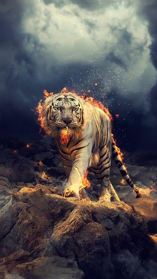 Обои на телефон тигр, огонь, feu