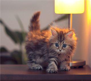 Обои на телефон стены, кошки, милые, котята