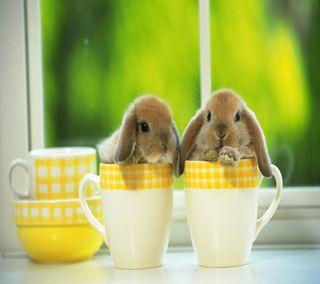 Обои на телефон cup, cute bunny, hd, милые, утро, кофе, чашка, кролик, кролики, чай