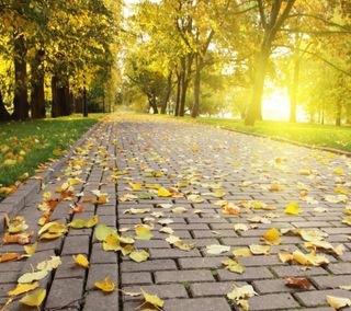 Обои на телефон солнечный свет, дерево, приятные, листья, взгляд, tree leaves sunlight