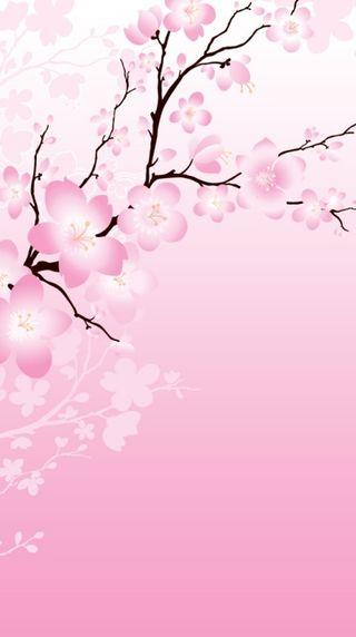 Обои на телефон вишня, цвести