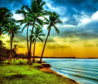 Обои на телефон природа, пляж, пейзаж, облака, небо, деревья