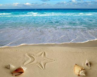 Обои на телефон раковина, песок, пляж, море, лето