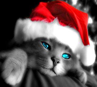 Обои на телефон рождество, ready for christmas, ------------------