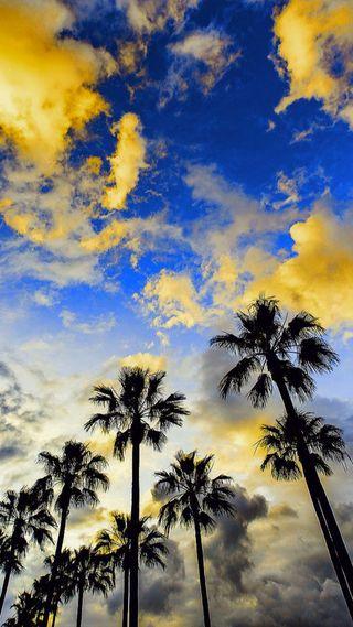 Обои на телефон силуэт, природа, пальмы, облака, небо, дерево