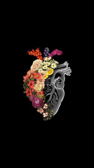 Обои на телефон цветы, супер, сердце, осьминог, бабочки, polka, huge, big, atlas