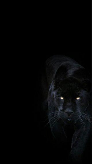 Обои на телефон пантера, черные, темные, кошки, животные, big