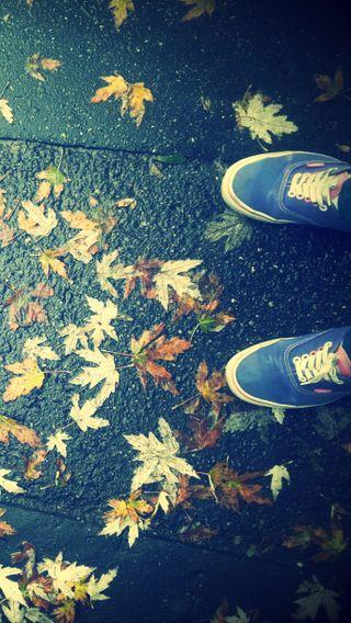 Обои на телефон осень, листья, vans