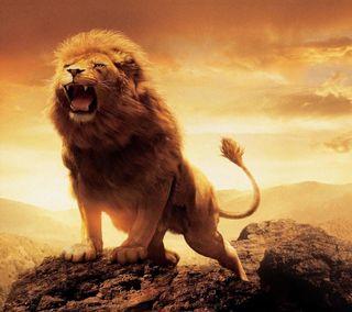 Обои на телефон прекрасные, лев, lg, g3, beautiful lion, 2880x2560