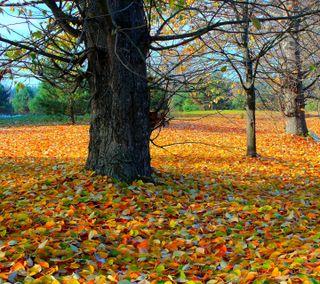 Обои на телефон природа, осень, листья, дерево