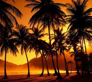 Обои на телефон пальмы, пляж