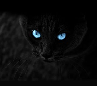 Обои на телефон глаза, черные, темные, синие, кошки