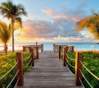 Обои на телефон солнце, путь, океан, пляж, пальмы, закат, дерево, sunset beach path