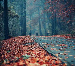 Обои на телефон парк, осень, листья, красые, дорога