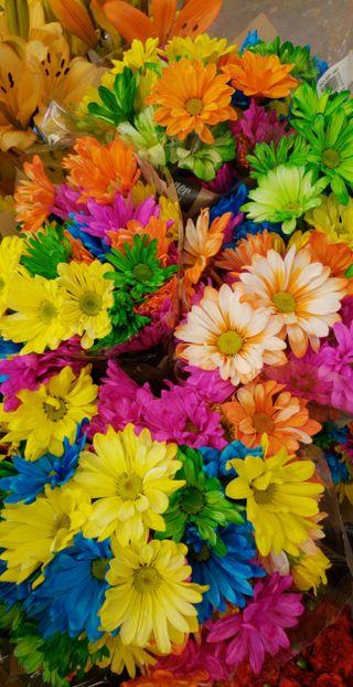 Обои на телефон маргаритка, цветы, ромашки, красочные