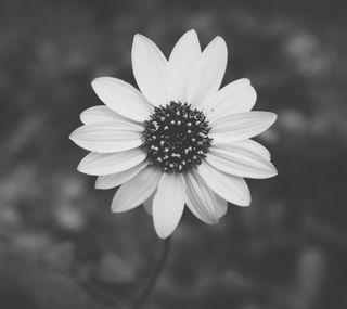 Обои на телефон школа, фотография, черные, черно белые, цветы, старые, белые, арт, old school bw 11, art