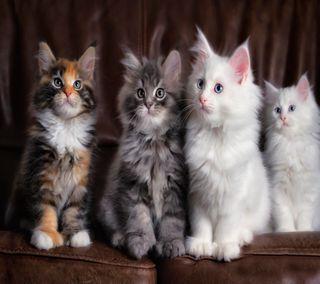 Обои на телефон питомцы, коты, животные