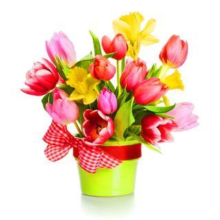 Обои на телефон свежие, цветы, фон, тюльпаны, прекрасные, красочные