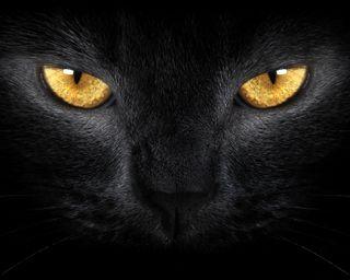 Обои на телефон питомцы, кошки, животные, глаза