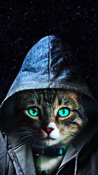 Обои на телефон кошки, галактика, galaxy
