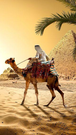 Обои на телефон пустыня, пирамида, песок, пальмы, мужчина, египет, дерево, арабские, man, camel