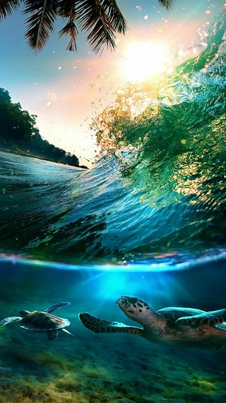 Обои на телефон черепаха, природа, под, океан, море, животные, волна, under ocean