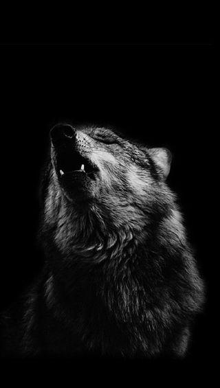 Обои на телефон волк, gfd