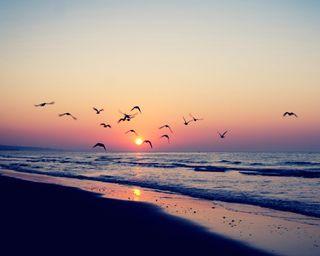 Обои на телефон океан, фиолетовые, птицы, пляж, песок, пейзаж, небо, летать, закат, волны, вечер, purple landscape, evening seaside