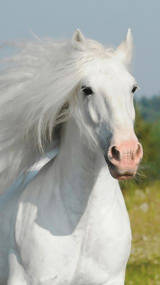 Обои на телефон лошади, icio, cavallo bianco