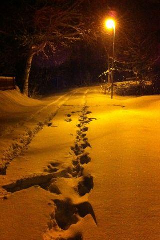 Обои на телефон прогулка, зима, walk in winter, in winter