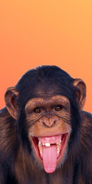 Обои на телефон питомцы, собаки, обезьяны