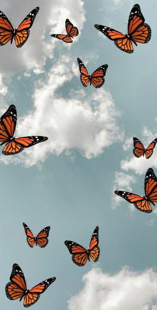 Обои на телефон эстетические, бабочки, природа, aesthetic butterfly