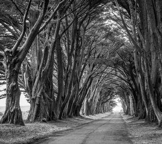 Обои на телефон страна, черные, цветные, прогулка, дорога, деревья, вечер, белые, evening walk, country road