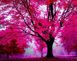 Обои на телефон розовые, приятные, природа, новый, луг, лес, естественные, деревья